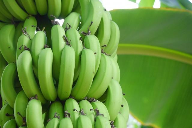 早口 言葉 バナナ